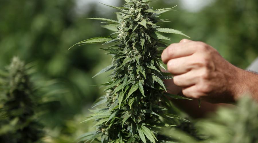 Хранение дикорастущей конопли сколько стоит марихуана в россии